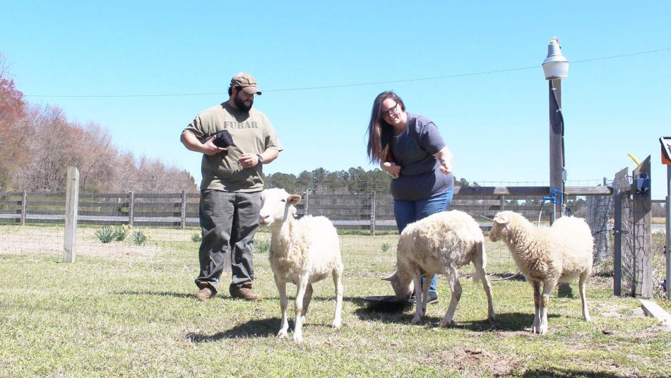 Two farmers with three sheep.