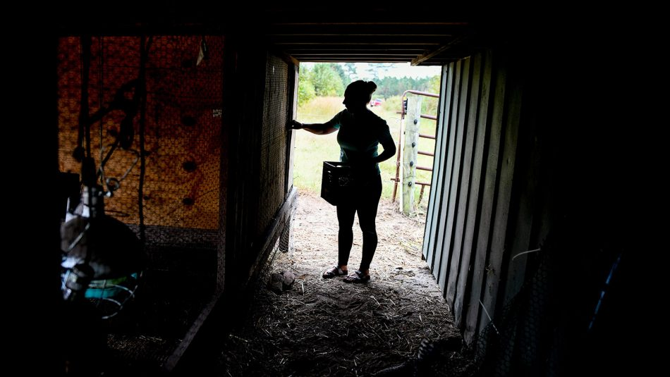 Silhouette of woman collecting eggs in her henhouse.