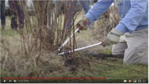 Cover photo for Blueberry Pruning With Dr. Bill Cline:  a Video